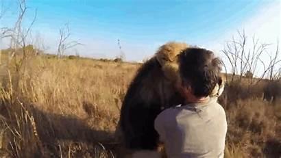 Lion Hug Nature Gifs Pov Hugs Giant