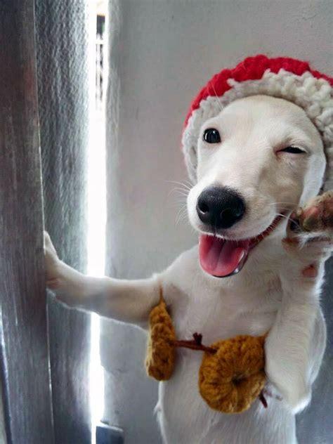 conheca  cachorro sorridente da tailandia euro tudo