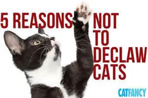 Cat Declaw Surgery