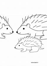 Hedgehog Coloring Pages Nazo Herisson Coloriage Dessin Shadic Animals Template sketch template