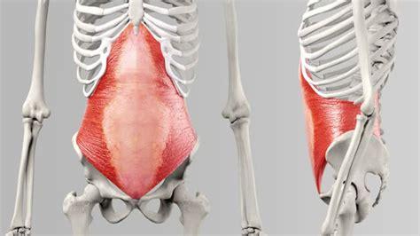 musculus transversus abdominis doccheck tv
