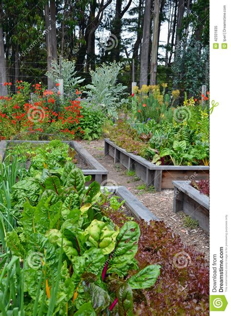 flower and vegetable garden stock photo image 42331835