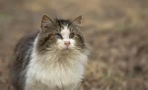 for cats to blind cat oleg volk