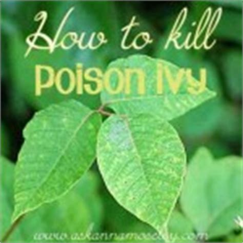 how to kill poison oak how to remove a tree stump painlessly