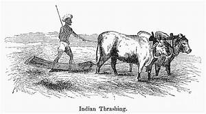 India: Farming, C1850s Photograph by Granger