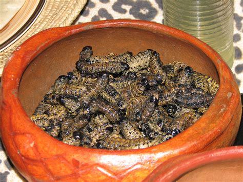 cuisine confo congolese cuisine cassava caterpillars and the best