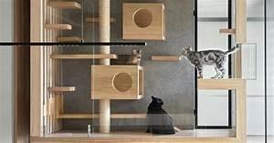 Image, Result, For, Modern, Cat, Tree