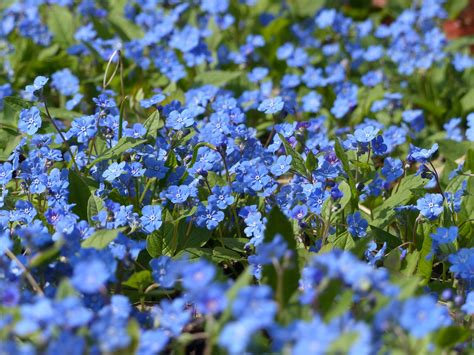 Blau Foto & Bild   pflanzen, pilze & flechten ...