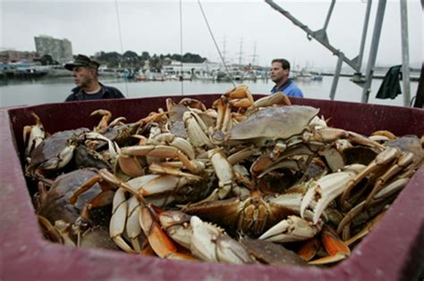 Crab Fisherman Deckhand Salary by The Most Interesting Professions Thoughts Of Class 9 D