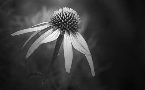 Flowers In Black And White  Annette Schreiber  Fine Art