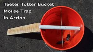 Teeter Totter Bucket Mouse Trap In Action With Motion
