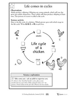 cycle of a chicken worksheets for 2nd grade our 5 favorite prek math worksheets science experiments