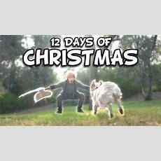Markiplier's 12 Days Of Christmas Youtube