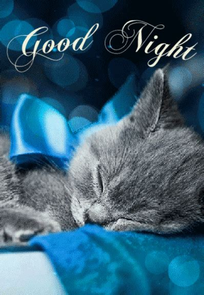 sleeping kitty good night gif pictures   images