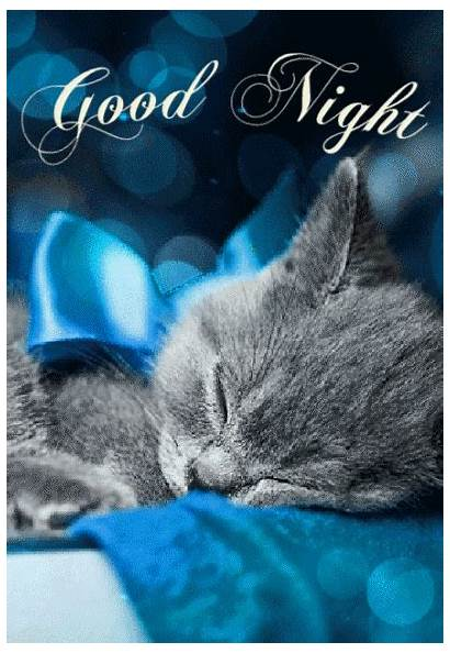 Night Quotes Dreamies Cat Animated Sayings Animals