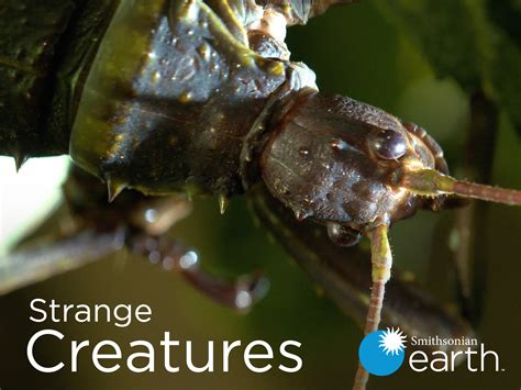 Strange Creatures: Season Two Available on Smithsonian Earth - canceled + renewed TV shows - TV ...