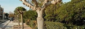 Abattage D Arbres Autorisation : abattage arbre yverdon arbre impec ~ Premium-room.com Idées de Décoration