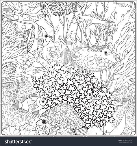 pattern decorative corals sea aquarium fish stock vector  shutterstock