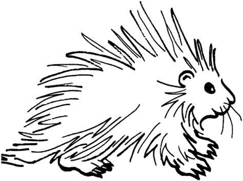 Porcupine Coloring Page Eskayalitim