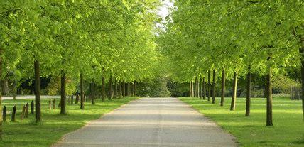 avenue  lime trees  polesden lacey surrey uk