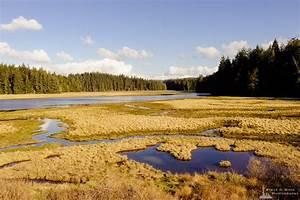 Estuary, Niawiakum, River, Natural, Area, Washington, Winter, 2017