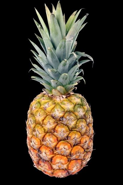 pineapple  stock photo public domain pictures