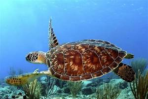 Interesting Sea Turtle Facts