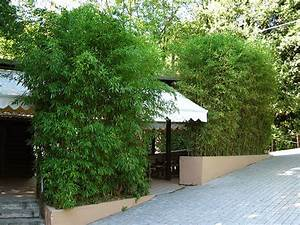 Kübel Bepflanzen Winterhart : bambus als sichtschutz f r die gastronomie kaufen ~ Michelbontemps.com Haus und Dekorationen