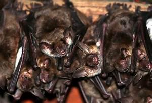In Welche Himmelsrichtung Schlafen : welche tiere sind die gr ten schlafm tzen ~ Markanthonyermac.com Haus und Dekorationen