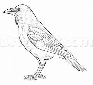 How to Draw Ravens, Step by Step, Birds, Animals, FREE ...