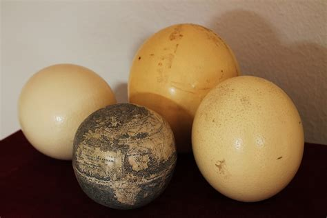 The History Blog » Blog Archive » Ostrich Egg Globe May Be