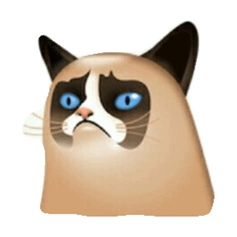 Grumpy Cat Sticker By Imoji For Ios & Android Giphy