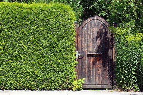 Mehr Privatsphaere Im Garten by Sichtbarrieren F 252 R Mehr Privatsph 228 Re Im Garten Ratgeber