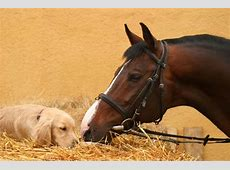 animals, horse, horses, puppy image #751718 on Favimcom
