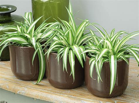 quelle plante pour une chambre des plantes aux vertus dépolluantes pour votre intérieur