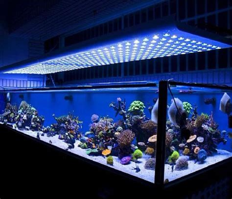 best led lights for reef tank in 2017 market top 5