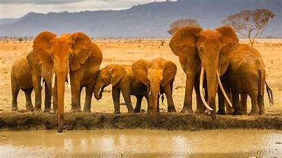 Elephant Animal Wallpapers African Background Indian Wild