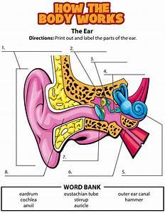 Ear Activity