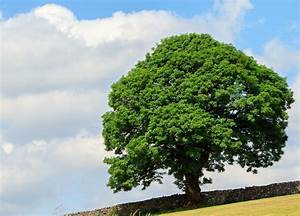 Tree In Summer Free Stock Photo - Public Domain Pictures