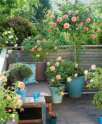 best patio plants design ideas Small Rose Garden   Growing Roses in Containers (Balcony, Patio and Terrace)   Balcony Garden Web