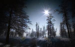Flakes winter snow night moon light landscapes trees ...