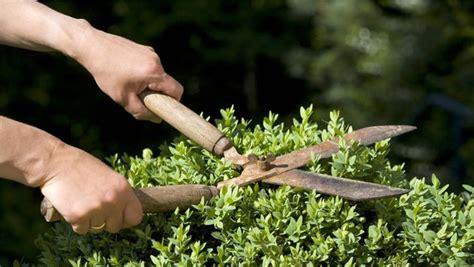 wann dürfen hecken geschnitten werden wann d 252 rfen b 228 ume und hecken beschnitten werden kleingartenverein luftwarte e v hansestadt