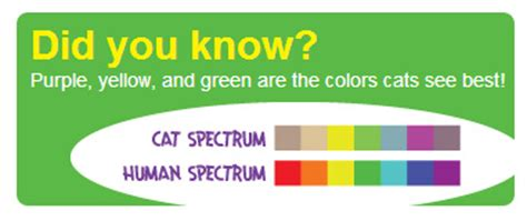 cat color vision cat amazing puzzle for cats hauspanther