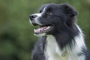 extremely small bathroom ideas border collie breed information