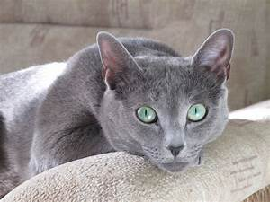 Haus Auf Russisch : russian blue cat our berta cats pinterest ~ Articles-book.com Haus und Dekorationen