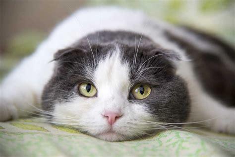 homoeopathie fuer katzen bei erschoepfung nach unfall geburt