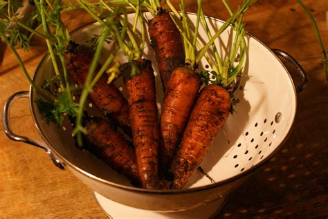 Here are the best of carrot recipes for you start cooking! Roasted carrot paste recipe : SBS Food