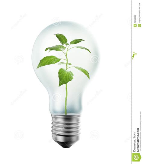 plant inside a bulb stock images image 23258084