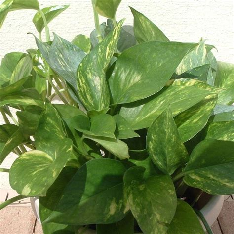 low light houseplants the 7 best houseplants for low light conditions lights and image search