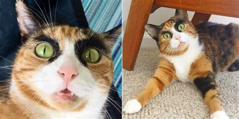 calico cat crazy cats she names judges jersey